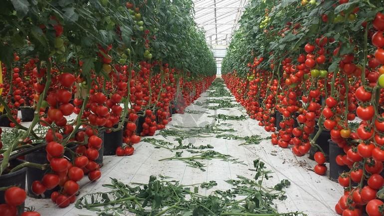 Выгода выращивания
