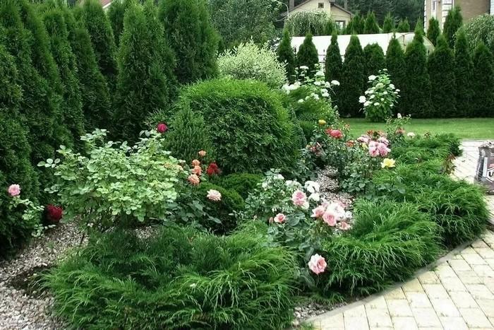 Красивая клумба с розами и другими цветами: 55 примеров с фото