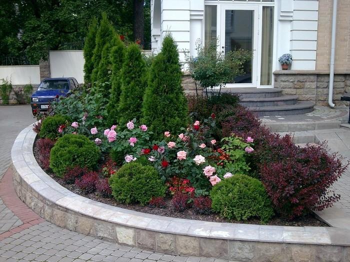 Розы с хвойниками