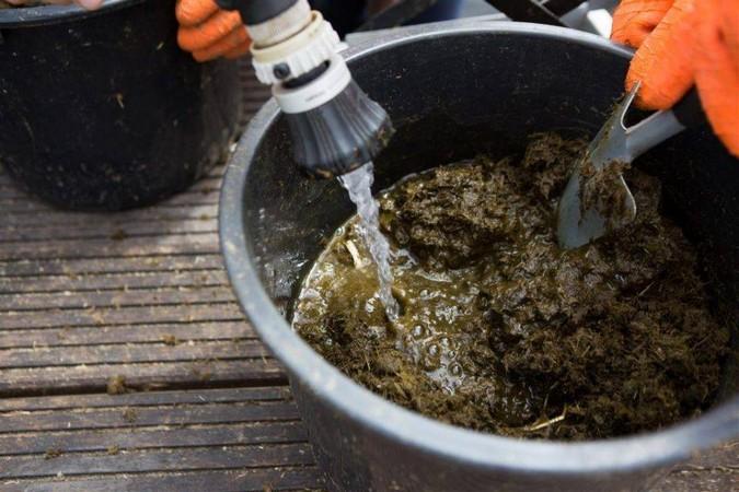 Как использовать органические подкормки для огурцов