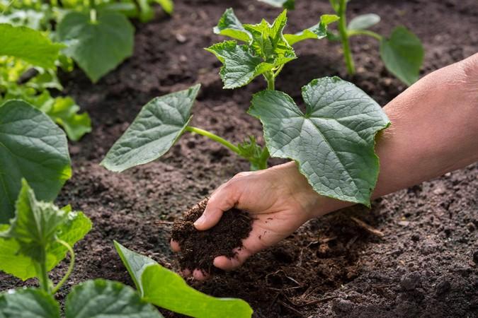 Когда и как правильно вносить удобрения