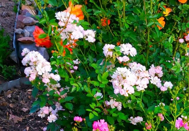 Садовый аромат