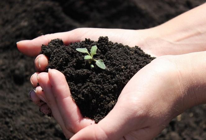 Что такое сапропель и как его использовать в саду и огороде