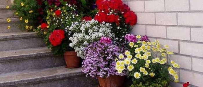 Цветы на лестнице