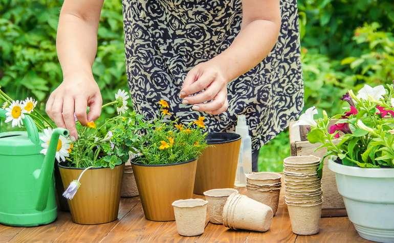 Применение золы для цветов и комнатных растений