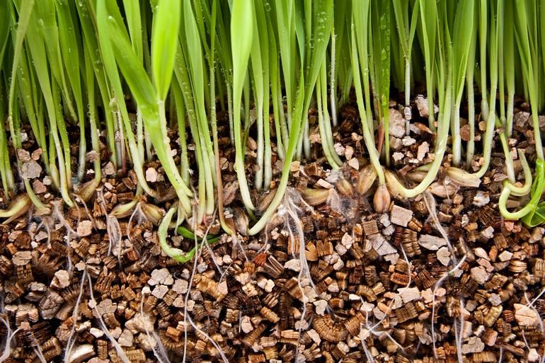 Применение для растений