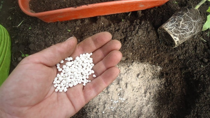 Мочевина как удобрение для растений: как правильно разводить и вносить
