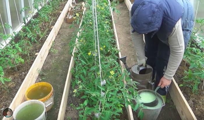 Чем можно подкормить огурцы в открытом грунте. Виды и расписание подкормок от высадки рассады и до окончания плодоношения