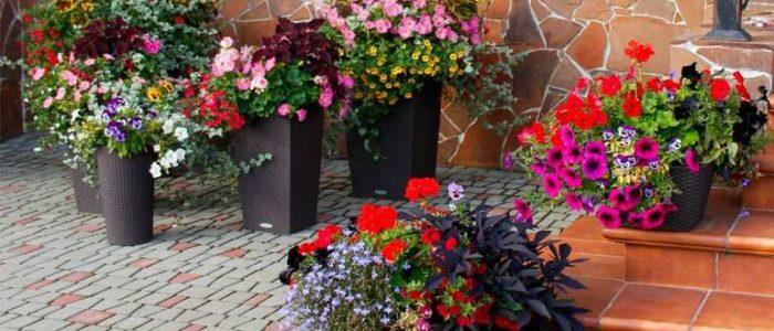Цветы в кашпо н а лестнице