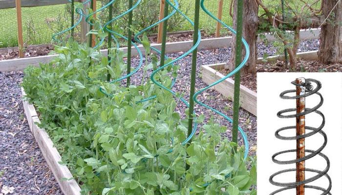 Дуги в качестве опор для вьющихся растений