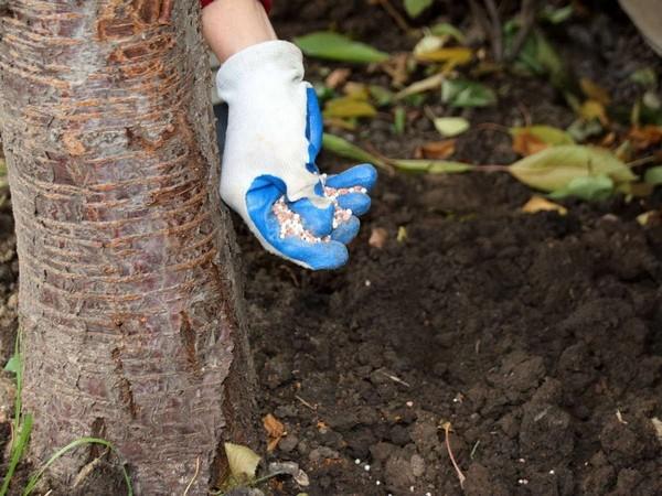 вносить удобрение осенью
