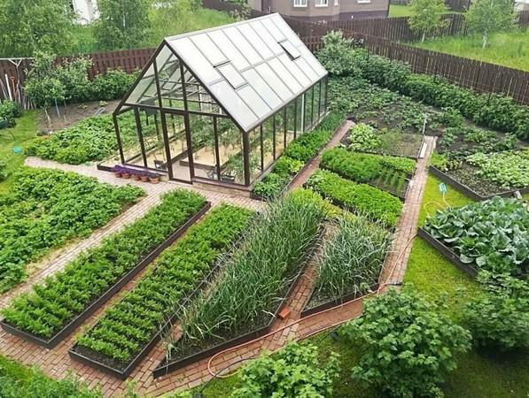 растения для огорода