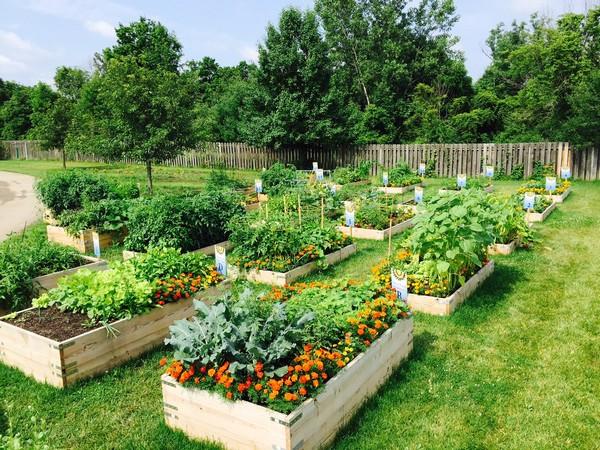 Сочетание растений на огороде