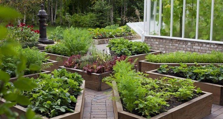 Красивый огород в частном доме