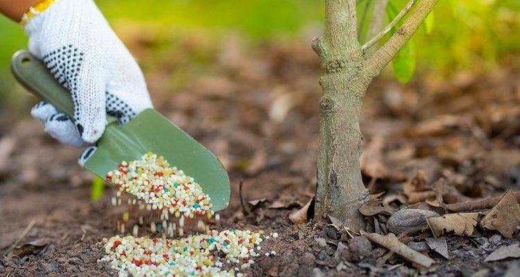 осенние удобрения для сада и огорода