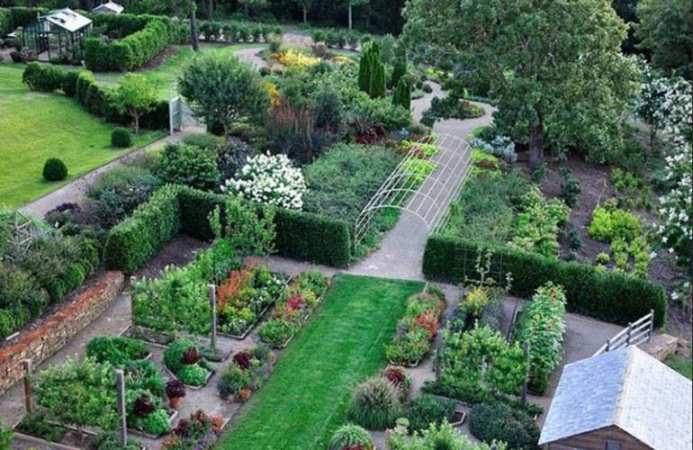 Живая изгородь на огороде