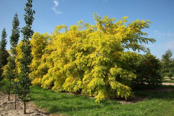 Примеры живой изгороди (50 фото) с описанием растений