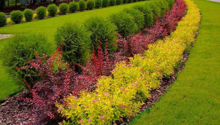 Живая изгородь из разных кустарников